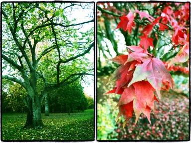 cardiff-autumn-71885a