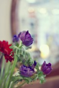 cardiff-forbesfield-flowers-025