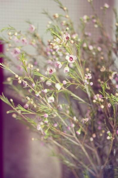 cardiff-forbesfield-flowers-062