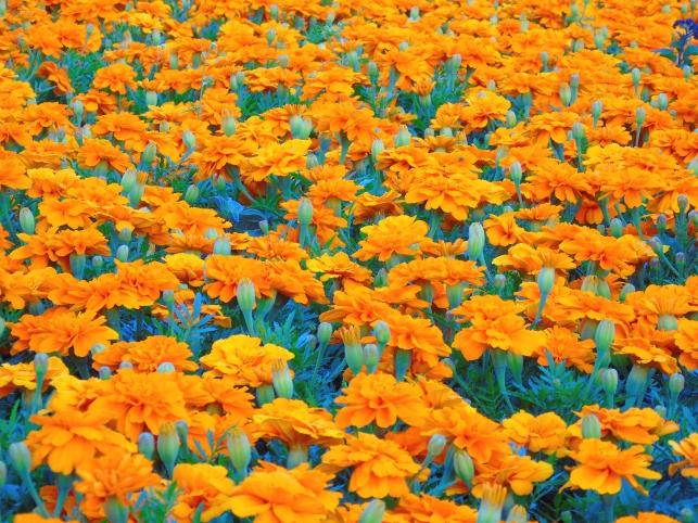 01072014-web-photo365